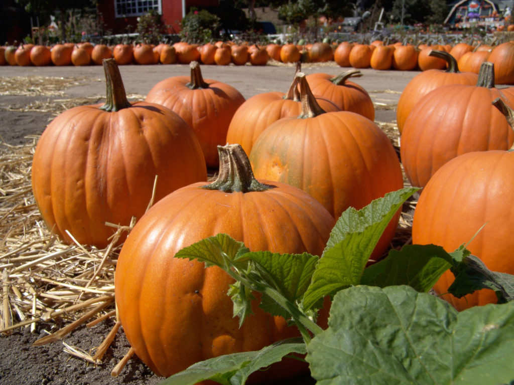 Homecare in Duncan SC: Join the Pumpkin Craze?